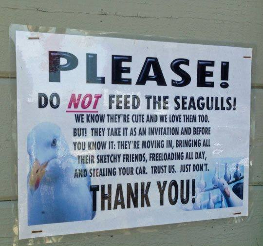 Name:  do-not-feed-the-seagulls.jpg