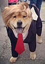 Click image for larger version.  Name:2018 Trump doggie. crop for avatar.jpg Views:51 Size:22.6 KB ID:114071