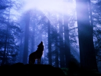 Morning Wolf's Avatar