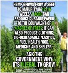 Hemp Speed