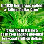 Hemp, a billion dollar crop